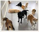 犬の幼稚園