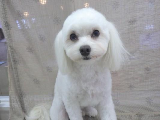 犬のおまわりさん(^_-)-☆