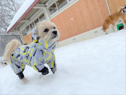 すごい雪だよ♪